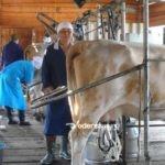 Быйыл фермердэри кытаанах күөн күрэс күүтэр